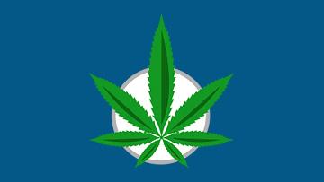 Cannabis Stats Hub