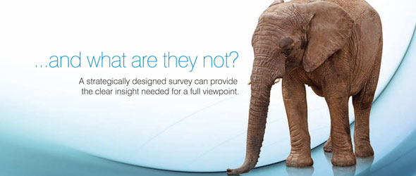 A photograph of an elephant accompanied by the text ... and what are they not? A strategically designed survey can provide the clear insight needed for a full viewpoint.