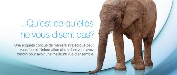 Image d'un éléphant accompagnée du texte « ... Qu'est-ce qu'elles ne vous disent pas? Une enquête conçue de manière stratégique peut vous fournir l'information claire dont vous avez besoin pour avoir une meilleure vue d'ensemble. »