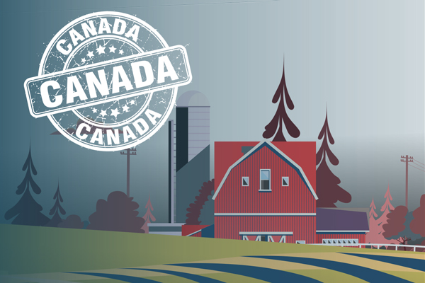 Thank you to Canadian farmers: Insights into their vital role in Canada's food chain